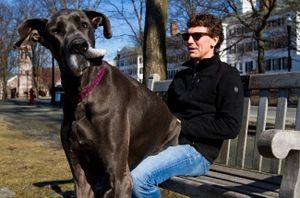 """Những chú chó cưng """"khổng lồ"""" trên thế giới"""