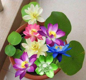 Cách trồng hoa sen mini Nhật đủ sắc màu cho nhà thơm ngát, rực rỡ ngày hè