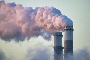 Chế tạo thành công cây nhân tạo, hấp thụ khí carbon hiệu quả gấp 1.000 lần cây xanh thật