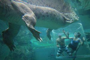 Rợn người tour du lịch mạo hiểm cho khách đùa giỡn thú dữ