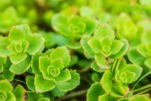 Những loài cây thích hợp trồng trên mái nhà