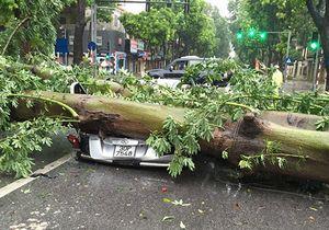 Mưa ngập, cây đổ hàng loạt trên phố Hà Nội