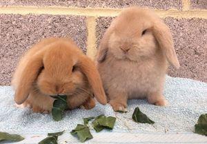 Top 10 loài thỏ phổ biến nhất thế giới