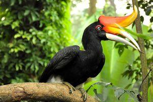 Top 10 loài chim có chiếc mỏ kỳ quái nhất