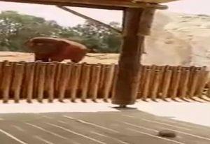 Bé gái 7 tuổi mất mạng oan uổng vì bị con voi ném đá vào đầu