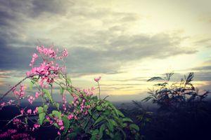 Về thăm vùng đất '7 núi' An Giang