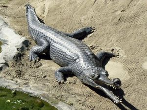 10 động vật có bề ngoài xấu xí nhưng 'lành tính' nhất thế giới