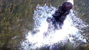10 clip 'nóng': Bắt thủy quái 'khổng lồ' trên sông Fraser