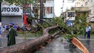 Sài Gòn mưa lớn, cổ thụ bật gốc trúng người đi đường nguy kịch
