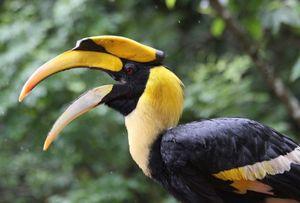 """Ngắm loài chim có """"bảo bối"""" hấp dẫn bạn tình nhất VN"""