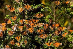 """Ngỡ ngàng ngắm """"vương quốc"""" bươm bướm đẹp nhất thế giới"""