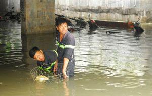 Cơn mưa lịch sử ở TP.HCM gây thiệt hại hàng trăm tỷ đồng