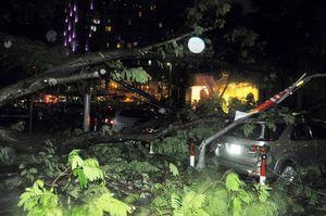 TPHCM: Mưa giông đổ cây, cột điện đổ đè hàng loạt ôtô