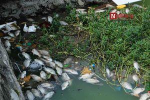 Hà Nội: Cá chết trắng, bốc mùi trên mặt nước ven hồ Tây