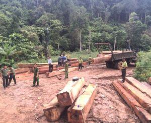 Đắk Lắk: Phát hiện thu giữ hơn 35m3 gỗ lậu