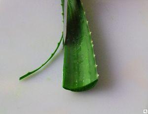Tự chế gel lô hội chanh tại nhà để khắc phục mọi nhược điểm da tóc