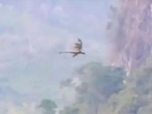 Video rồng bay ở Trung Quốc khiến giới truyền thông 'phát sốt'