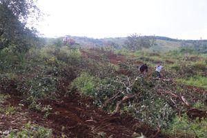 Vụ nổ súng khiến 18 người thương vong: Doanh nghiệp tự ý san ủi vườn điều