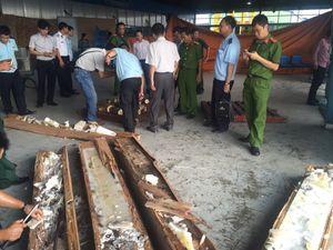 Bắt 1 tấn ngà voi nhập lậu cất giấu tinh vi trong các khối gỗ lớn