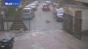Xế hộp mới mua bị 'tưới nước', người đàn ông cán thẳng lên chú chó hoang để trả thù