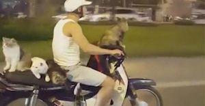 Anh chàng người Việt chở 4 con mèo đi dạo bằng xe máy bỗng nổi như cồn trên báo nước ngoài