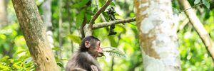 Lạc vào… vương quốc khỉ