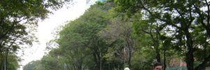 Saigontourist phục vụ hơn 39.000 du khách dịp Tết