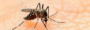 Chủ động phòng, chống nguy cơ lây nhiễm vi rút Zika