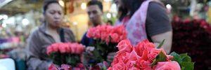 """Hoa hồng tăng giá """"đột biến"""" dịp Lễ tình nhân"""