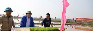 Tân Bí thư Hà Nội xuống ruộng cùng người nông dân cấy lúa