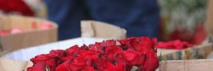 Tận dụng hoa Tết cho... Valentine