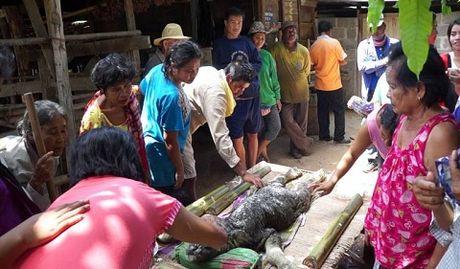 Quái vật mình trâu đầu cá sấu ở Thái Lan