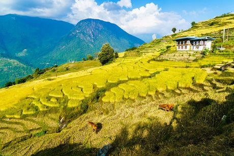 Ve dep xu so Bhutan qua goc nhin nhiep anh gia Viet - Anh 3