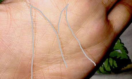 Người có bàn tay chữ M có gì đặc biệt?