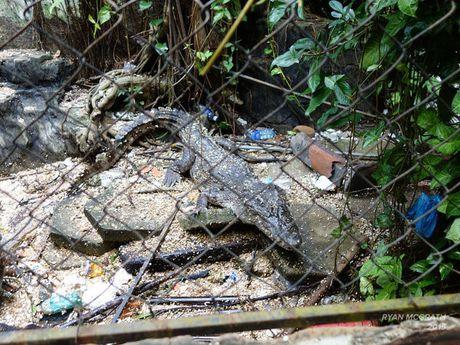 Công viên nước bị bỏ hoang ở Việt Nam bất ngờ lên báo Mỹ