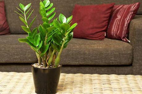 Nên mua những loại cây cảnh nào cho Tết 2016 đầy tài lộc?