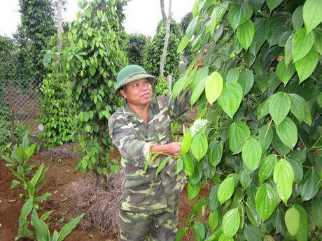 Đa cây, đa con thu hàng trăm triệu đồng