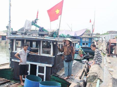 Hệ lụy từ tình trạng cá chết ở vùng biển miền Trung