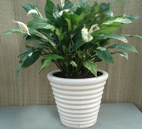 9 loại cây hút khí độc cực tốt nên trồng trong nhà vào mùa hè