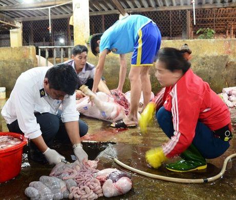 Phát hiện lợn nhiễm chất tạo nạc tại lò mổ lớn nhất Nghệ An