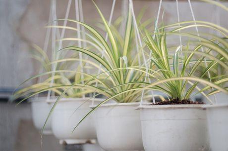 5 loài cây cảnh vừa xanh vừa xinh lại an toàn khi trồng trong nhà