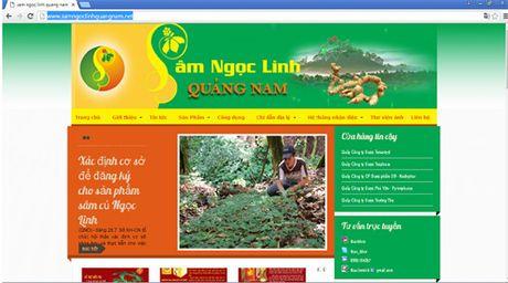 Bi quyet nhan dien sam quy Ngoc Linh - Anh 4