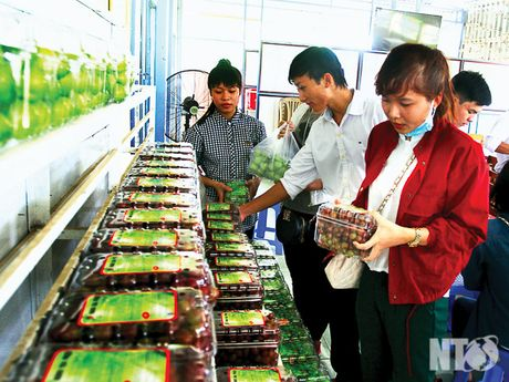 Ninh Thuan: Chap canh cho 'nu hoang' bay cao, bay xa - Anh 1