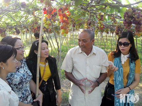 Ninh Thuan: Chap canh cho 'nu hoang' bay cao, bay xa - Anh 2