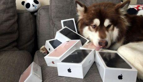 Mua iPhone 7s cho cho - Anh 1