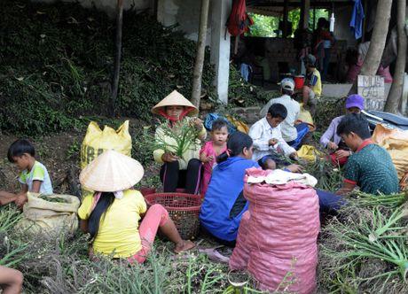 Dan lang o at hai cau non ban sang Trung Quoc - Anh 5