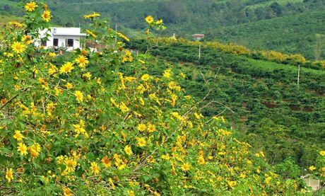 Thang 10 - mua san lua chin va hoa da quy - Anh 2