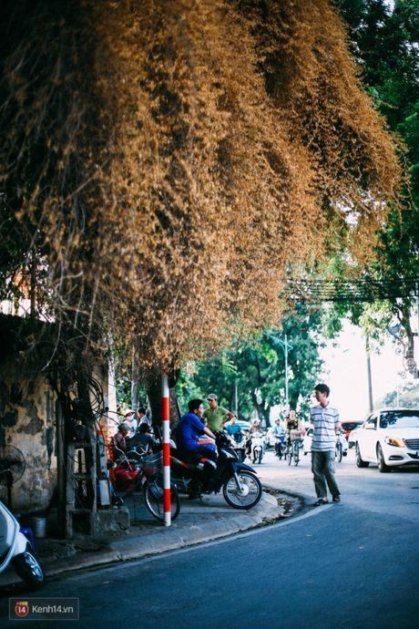 'Bao' mang cay hoa giay bong chuyen mau vang o HN - Anh 6