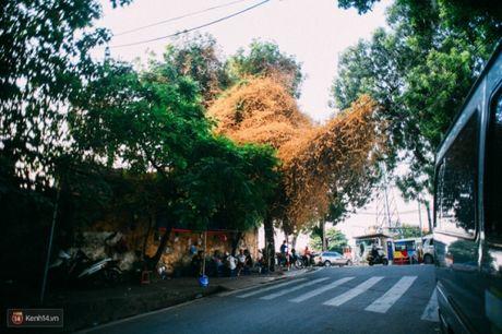 'Bao' mang cay hoa giay bong chuyen mau vang o HN - Anh 7