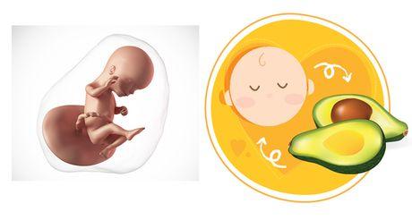 Su phat trien cua thai nhi trong tuan thu 15 - Anh 1
